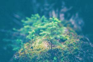 rent a tree
