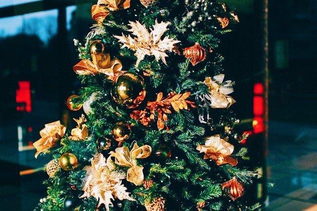 warum nicht mal einen weihnachtsbaum mieten pippa pie maker. Black Bedroom Furniture Sets. Home Design Ideas